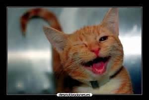 sonríe gato