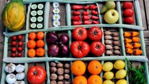 Frutas-verduras-frescas-esenciales-diaria_CLAIMA20160809_0205_28
